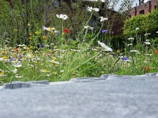 Wildflowers - Angel Field