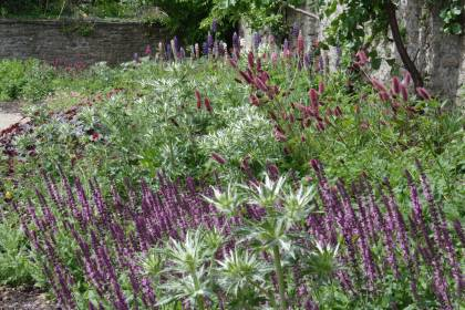 Prairie planting, Salvia x sylvestris 'Pink Delight', Stachys officinalis 'Pink Cotton Candy', Eryngium bourgatii, Heuchera micrantha 'Palace Purple', Geranium × oxonianum 'Wargrave Pink', Lupinus, The Bishop's Palace, Wells, The Garden of Reflection