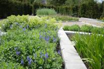 Planting tips, Colour garden, Garden of Refelction, Bishop's Palace Wells, Crocosmia 'Spitfire', Sedum spectabile 'Munstead Red', Veronica 'Inspire Blue', Alchemilla mollis