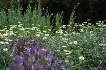 Planting tips, Colour garden, Garden of Refelction, Bishop's Palace Wells, Allium christophii, Anthemis tinctoria 'Sauce Hollandaise', Achillea 'Moonshine'