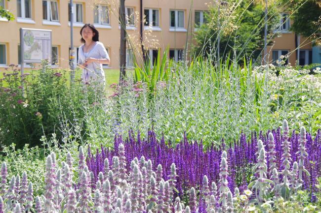 Loughborough University planting detail 1
