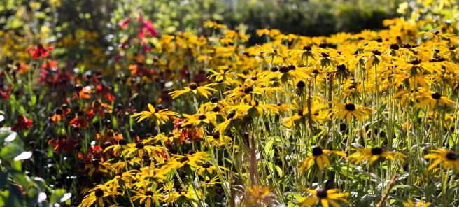 Bca Landscape Rotunda - Mid Oct 2015 - harvest garden